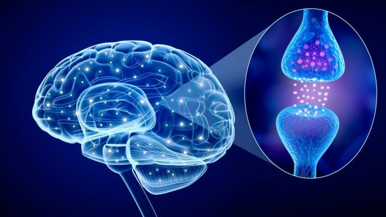 Hjerne viser os, hvad vi lærer fra videnskaben om kærlighed