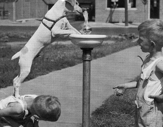 Hund drikker vand ved hjælp af drenge
