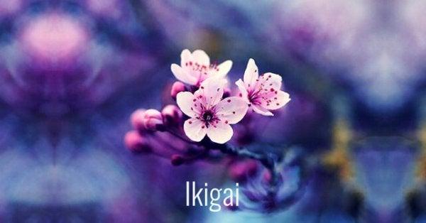Blomst illustrerer ikigai