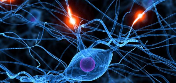 Neuroner illustrerer, hvordan vi kan blive syge af vrede