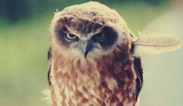 Ugle med vredt blik formår at udtrykke negative følelser