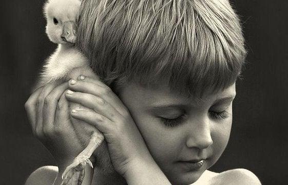 Dreng krammer ælling