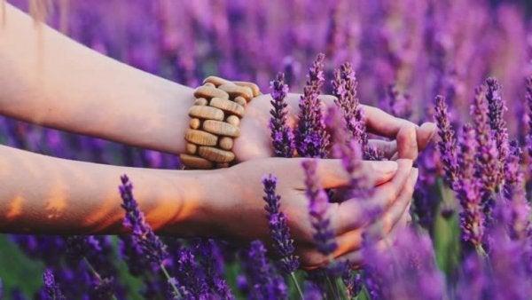 Kvindes hænder på lavendelmark