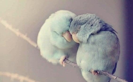 """Fugle krammer som en måde at sige """"jeg tror på dig"""" på"""
