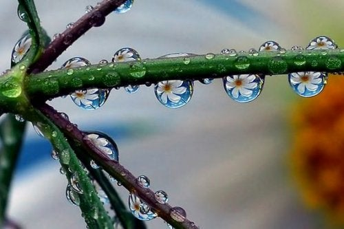 Vanddråber på gren