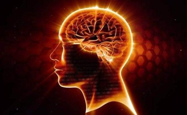 Omega-3 beskytter vores neuroner