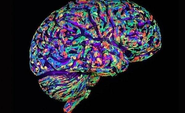 Hjerne i forskellige farver