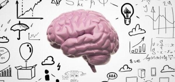 Hjerne med tegninger omkring illustrerer hukommelse