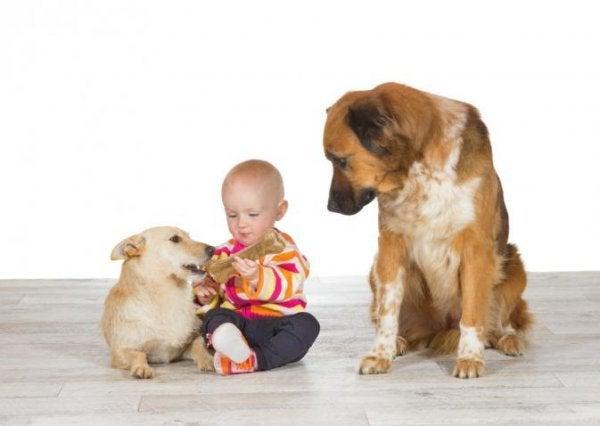 Kæledyr og babyer kan føre til jalousi