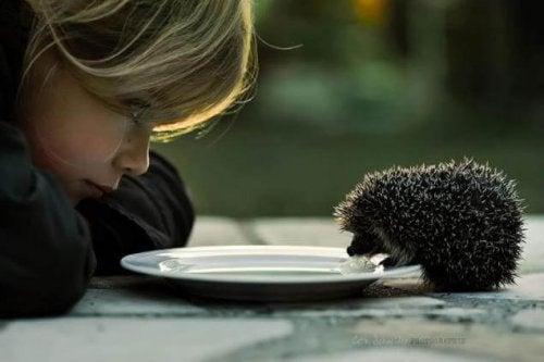 Dreng leger med pindsvin