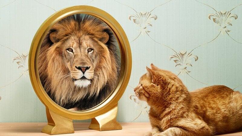 Kat, der ser sit spejlbillede som løve, kan se håb i mørket