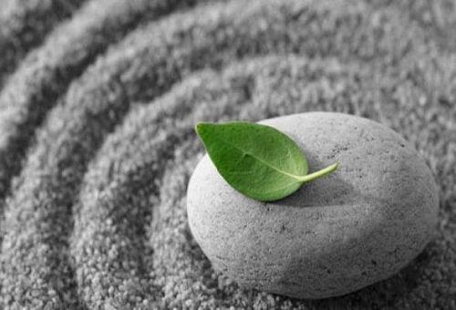 Sten med blad på