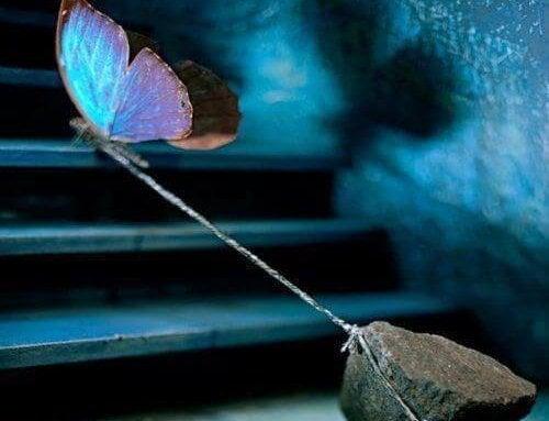 Sommerfugl bærer sten