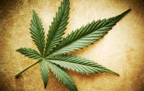 Myter, sandheder og halve sandheder om marihuana