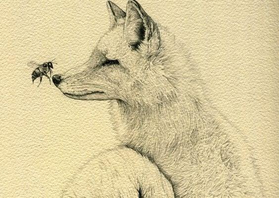 Bi lander på ulvs næse