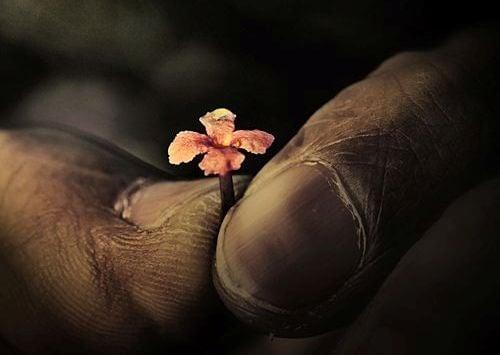 Lille blomst holdes mellem to fingre
