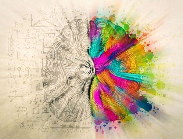 Der er myter om hjernen, og hvordan den består af to halvdele