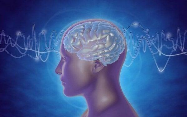 Hoved viser hjernebølger