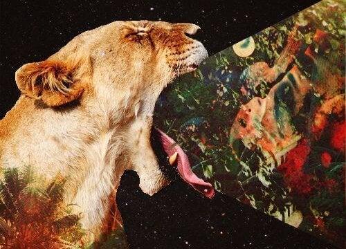 Løve ytrer sin mening foran nattehimmel