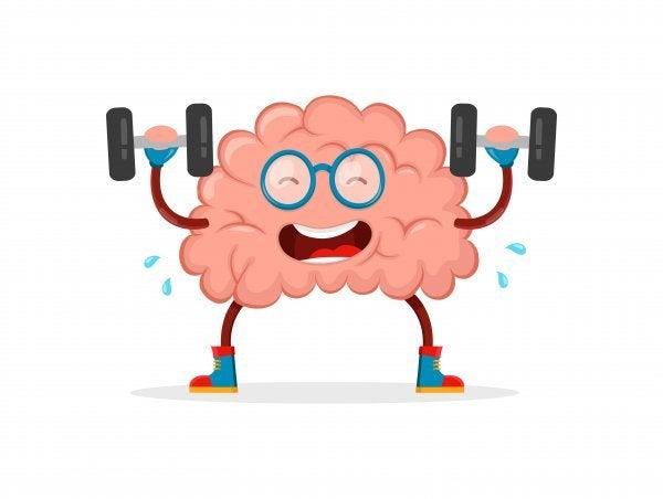 Der er forskellige myter om hjernen og træningen af den