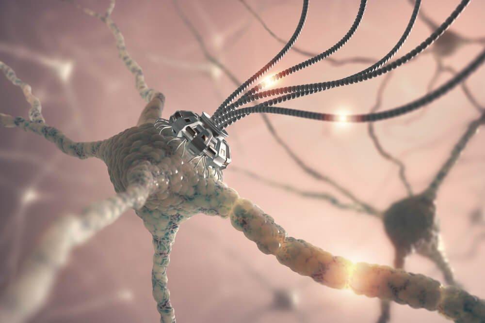 Neuroner er en del af neurovidenskab
