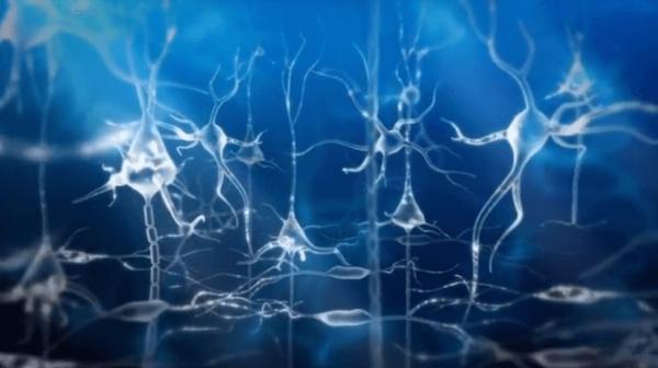 Neuroner er del af hjernebølger