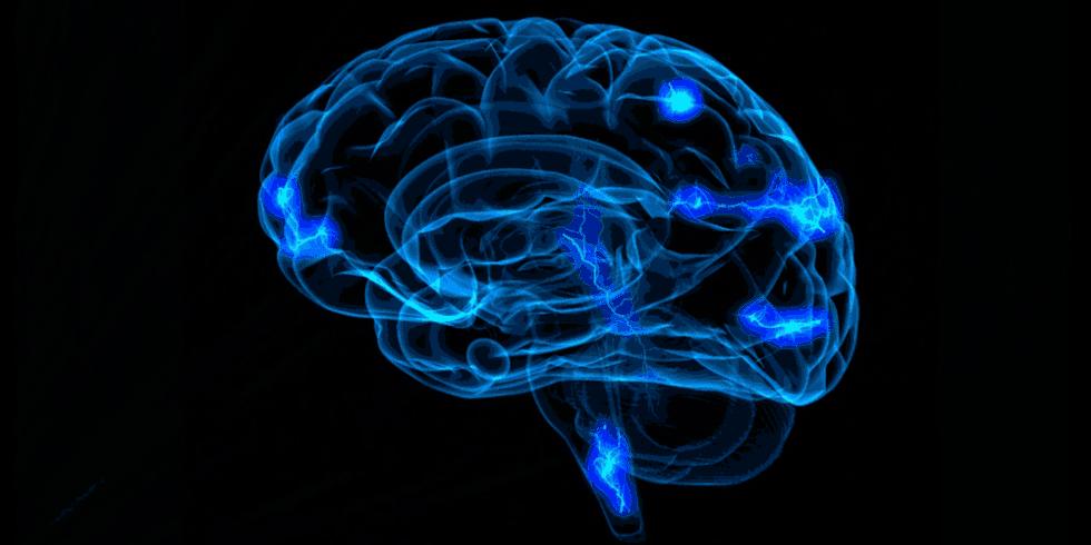 Hjerne illustrerer det limbiske system