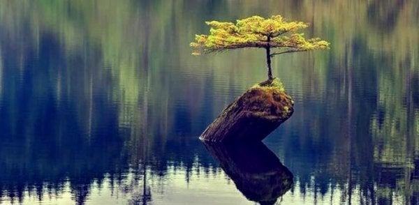 Lille ø med træ i sø