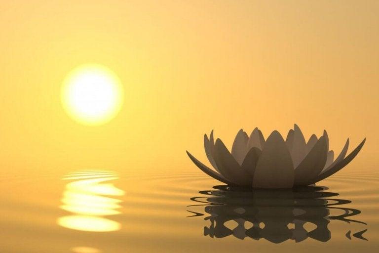 Blomst på vand foran solopgang
