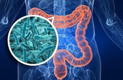 Billede illustrerer tarmbakterier