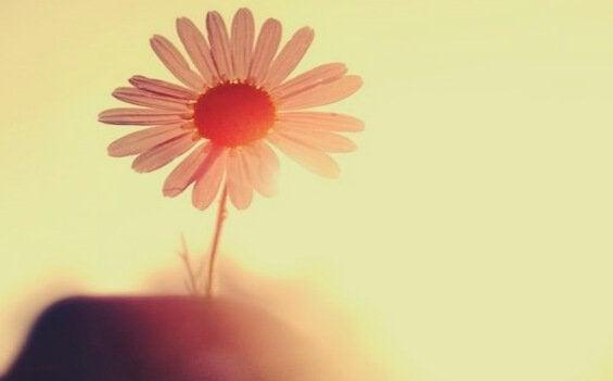 Blomst i sollys