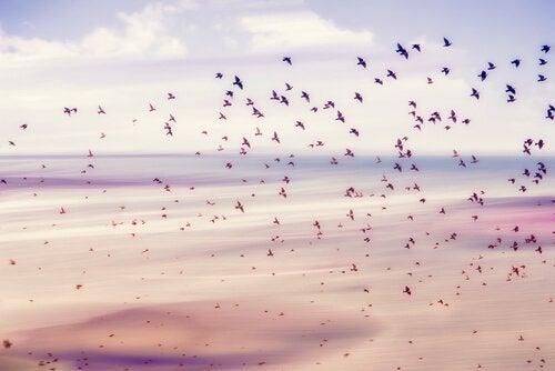 Fugle flyver og nyder deres frihed