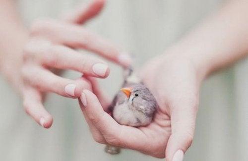 Lille fugl i menneskehånd