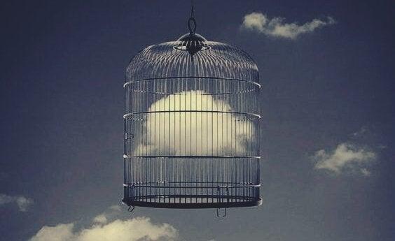 Fuglebur med sky i