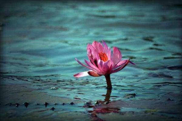 Pink blomst i vand