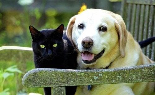 At sørge over et kæledyr: tabet af en kær ven