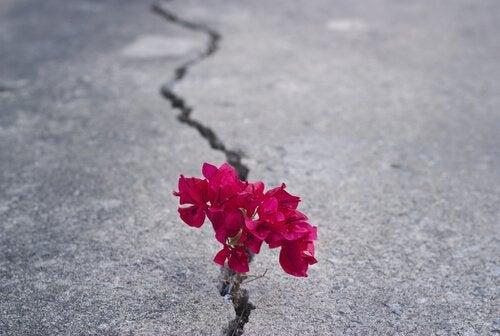 Revne i jord med blomst i