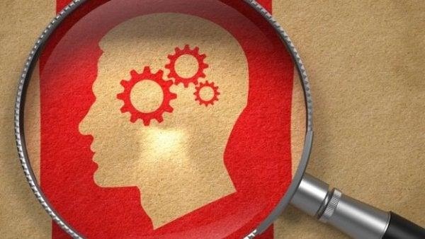 Forstørrelsesglas viser hjernen