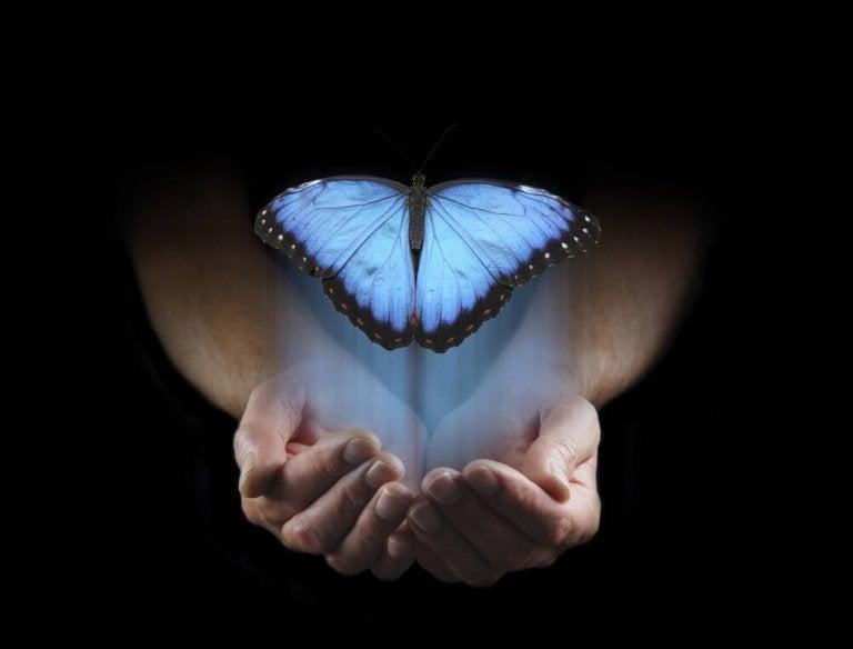 Blå sommerfugl i hænder symboliserer transformation