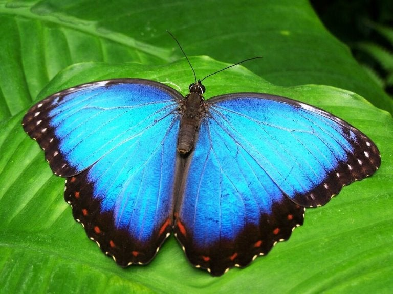 Blå sommerfugl symboliserer transformation