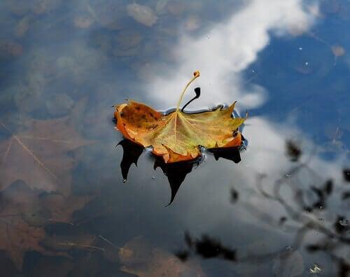 blad i vand