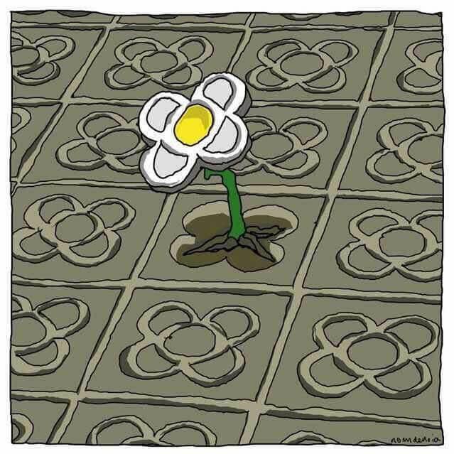 Blomst vokser op igennem asfalt