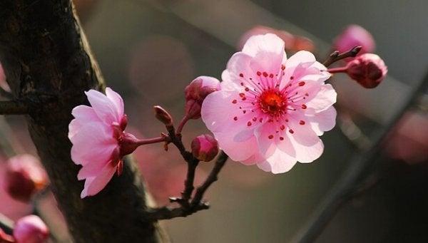 Lyserøde blomster