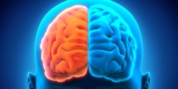 De to hjernehalvkugler kan lide under neurologiske lidelser