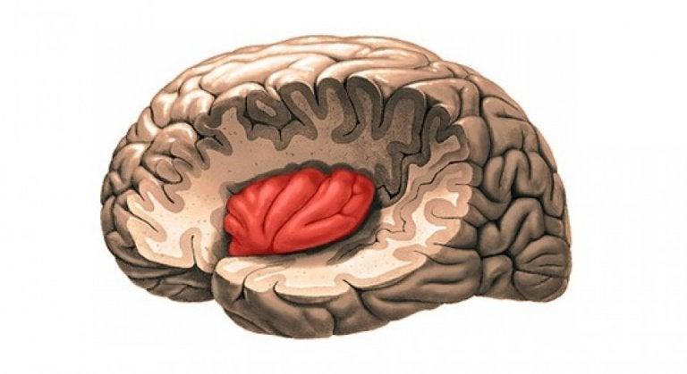 Insula i hjernen