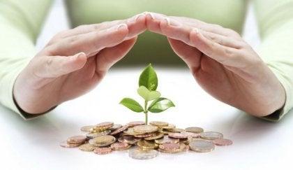 Person beskytter plantespire, der vokser ud af mønter, som symbol for ens økonomiske situation