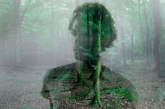 Mands silhuet i skov