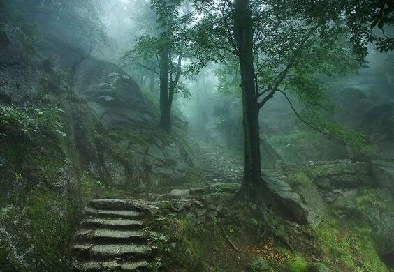 Skov kan bruges til skovbadning mod stress