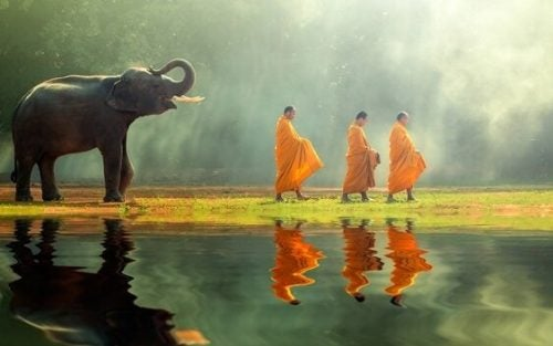 Elefant følger buddhistiske munke. 8 måder at gøre en ende på lidelser