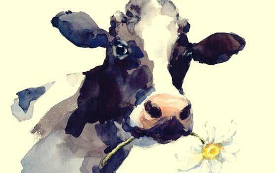 Historien om koen: når rutiner holder os fanget